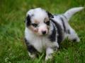Baby Emma| mobile Tierbetreuung Mössingen