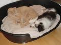 Aussi und Kater | mobile Tierbetreuung Mössingen