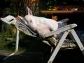 Bulli Emma schläft | mobile Tierbetreuung Mössingen