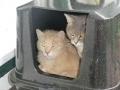 Katze und Kater im Katzenhaus | mobile Tierbetreuung Mössingen